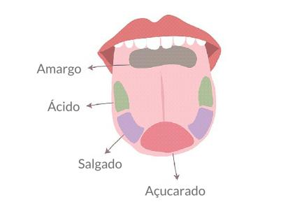 receptores-gustativos-da-lingua-como-degustar-um-vinho