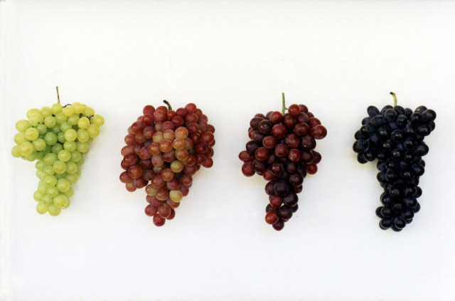 grape varieties Fernando Picarelli Martins flickr.jpg